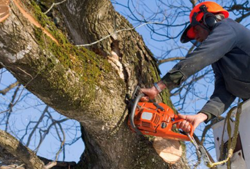 local tree cutting grimsby on